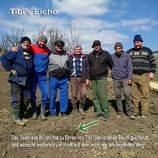 Tibis Eiche